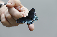 A butterfly on the end of a mans finger in Charlottesville, Va. Photo/Andrew Shurtleff