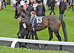 Camborne (no. 13), ridden by William Buick and trained by John Gosden, wins the Duke of Edinburgh Stakes for three year olds and upward on June 23, 2012 at Ascot Racecourse in Ascot, England.  (Bob Mayberger/Eclipse Sportswire)