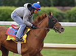 Animal Kingdom, trained by Graham Motion, exercises in preparation for the 137th running of the Kentucky Derby at Churchill Downs in Louisville, Kentucky to be run May 7, 2011.