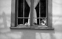 01.2010 Valparaiso (Chile)<br /> <br /> Chats derrière une fenêtre.<br /> <br /> Cats behind a window.