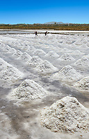Pictures & images of Men collecting and digging salt in a salt pan on the outskirts of Trapani, Sicily