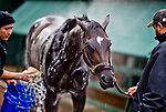 BALTIMORE, MD - MAY 12: Kentucky Derby winner Always Dreaming gets a bath after exercising in preparation for the Preakness Stakes next week at Pimlico Race Course on May 12, 2017 in Baltimore, Maryland.(Photo by Scott Serio/Eclipse Sportswire/Getty Images)