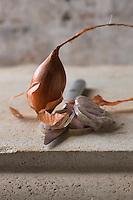Cuisine/Gastronomie générale: L'échalote est une plante bulbeuse de la famille des Alliacée, cultivée comme plante condimentaire et potagère.<br />  - Stylisme : Valérie LHOMME