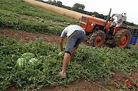 Contadini durante la raccolta di cocomeri. Farmers during the harvesting of watermelons....