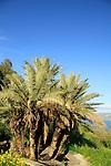 Ein Poriya in the Lower Galilee