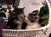 Carl, ANIMALS, photos(SWLA322,#A#) Katzen, gatos