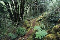 A tramping track of the Wangapeka Track - Kahurangi National Park