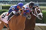 Wildcat Lily with jockey Jose L Alvarez on board wins the Azalea Stakes G3. Calder Racecourse, Miami Gardens, FL 07-06-13