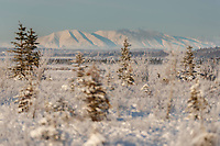 Winter landscape of Hoarfrost on trees and shrubs at Potter Marsh State Game refuge with Mt. Susitna, Sleeping Lady in background. Winter Southcentral, Alaska<br /> <br /> <br /> Photo by Jeff Schultz/  (C) 2020  ALL RIGHTS RESERVED