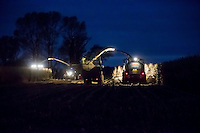 Harvesting forage miaze fro AD with Claas Jaguar foragers - November, Lincolnshire