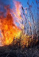 Marsh fire