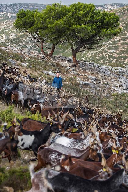 France, Bouches-du-Rhône (13),env de  Marseille, Le Rove:  André Gouiran, éleveur de chèvre du Rove et producteur de brousse du Rove  //  France, Bouches du Rhone, near Marseille:    André Gouiran, Rove goat breeder and producer of  of  the Real Rove Brousse, pure goat cheese  <br /> AUTO N 2013-150