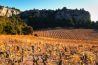 La Clape. Languedoc. Vines trained in Gobelet pruning. Vine leaves. Vineyard. France. Europe. Vineyards below the white limestone cliff.