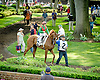 Master Shade before The John W. Rooney Memorial Stakes at Delaware Park on 6/2/12