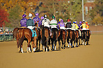 Horses parade towards starting gate in the Sentient Jet Breeders' Cup Filly & Mare Sprint (Grade 1) at Churchill Downs in Louisville, KY  on 11/04/11. (Ryan Lasek / Eclipse Sportwire)