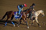 October 27, 2014:  One Lucky Dane, trained by Bob Baffert, exercises in preparation for the Sentient Jet Breeders' Cup Juvenile at Santa Anita Race Course in Arcadia, California on October 27, 2014. John Voorhees/ESW/CSM