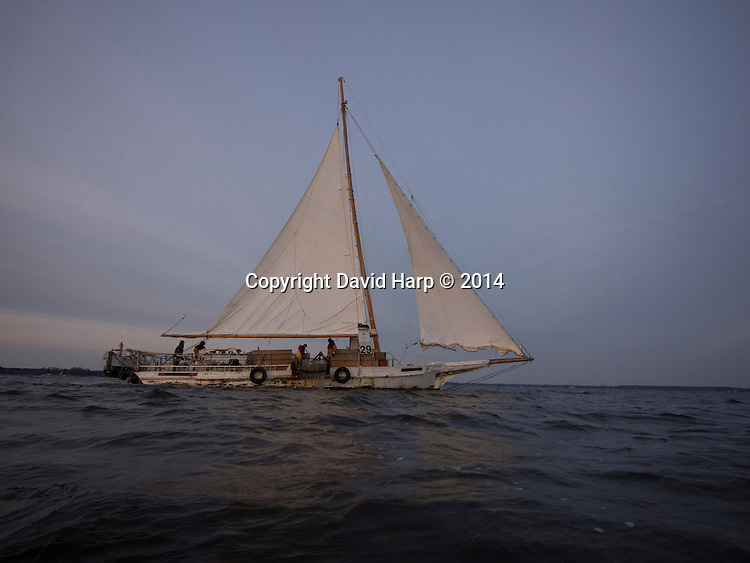 The skipjack Rebecca T. Ruark dredges for oysters under sail in the Choptank River.