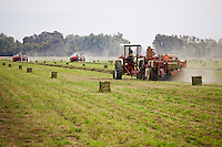 Alfalfa field hay baling, Visalia California with three New Holland tractors