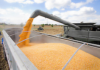Corn Combine unloading a harvested crop of raw kernels from the hopper into a tractor trailer.  All logos, graphics and colors have been removed.