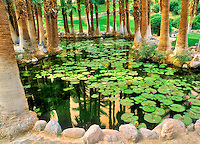 Lily pond in gardens of Furnace Creek Inn. Death Valley National Par, California