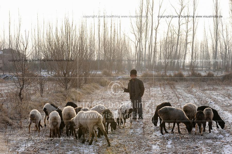 CHINA province Xinjiang, uighur town Opal near Kashgar, uighur shepherd with sheeps in winter season, behind dry poplar trees / CHINA Provinz Xinjiang, uigurische Stadt Opal bei Kashgar, hier lebt das Turkvolk der Uiguren, das sich zum Islam bekennt
