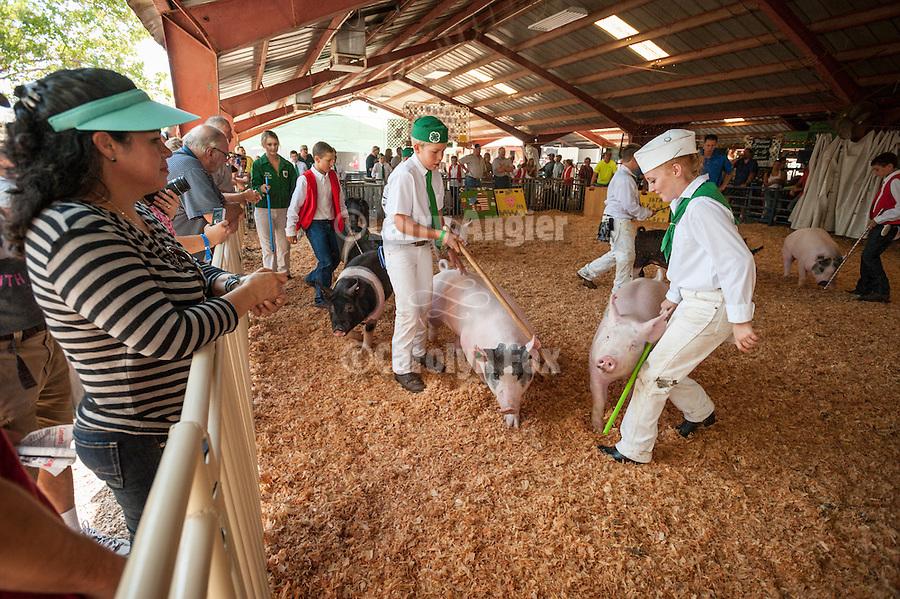 75th Amador County Fair, Plymouth, Calif.<br /> <br /> Junior pig show