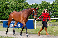 GBR-Jessica Watts presents A Sportsfield Cayenne during the First Horse Inspection for the CCI-L2* Section D.  2019 GBR-Saracen Horse Feeds Houghton International Horse Trial. Wednesday 22 May. Copyright Photo: Libby Law Photography