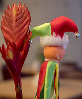 Topfpflanze mit Karnevalsschmuck im Altersheim, Luxemburg-City, Luxemburg, Europa<br /> Pot plant with carnival decoration in retirement home, Luxembourg City, Europe