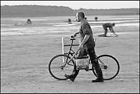 Europe/France/Picardie/80/Somme/Baie de Somme/Le Hourdel: ramassge des coques de La Baie de Somme, à la Pointe du Hourdel