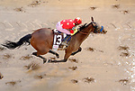 LOUISVILLE, KY - MAY 05: Abel Tasman #13, ridden by Mike Smith, wins the Longines Kentucky Oaks on Kentucky Oaks Day at Churchill Downs on May 5, 2017 in Louisville, Kentucky. (Photo by Jon Durr/Eclipse Sportswire/Getty Images)