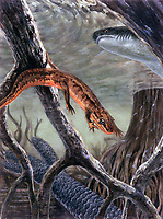 illustration of Discosauricus, this small 10 cm, flat headed amphibian falls within the seymouriamorphs, swimming above is a Xenacanth, a freshwater shark, Early Permian, 260 MYA, prehistoric marine life