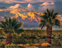 Sunset with palm trees and funeral Mountains. Death Valley National Park, California