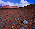 A  lone Silversword found in the barren wilderness of the craters at Haleakala National Park, Maui