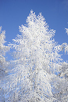 foto della val di sole in inverno,paesaggi innevati,immagini dei villaggi e delle località turistiche, Photos of Val di Sole in winter, snowy landscapes, images of villages and resorts, Foto's van de Val di Sole in de winter, besneeuwde landschappen, beelden van de dorpen en resorts, Photos du Val di Sole en hiver, paysages enneigés, des images de villages et, Fotos des Val di Sole im Winter verschneite Landschaften, Bilder von Dörfern und Resorts, Fotos de la Val di Sole en invierno, paisajes nevados, imágenes de pueblos y centros turísticos, Zdjęcia Val di Sole w zimie, śnieżne krajobrazy, obrazy wsi i ośrodków, Фотографии Валь-ди-Соле зимой, снежные пейзажи, образы деревень и курортов Fotografii Val'-di-Sole zimoy, snezhnyye peyzazhi, obrazy dereven' i kurortov, 在瓦爾迪獨家的照片,冬天雪景,村莊和度假勝地的圖片 Zài wǎ'ěr dí dújiā de zhàopiàn, dōngtiān xuějǐng, cūnzhuāng hé dùjià shèngdì de túpiàn