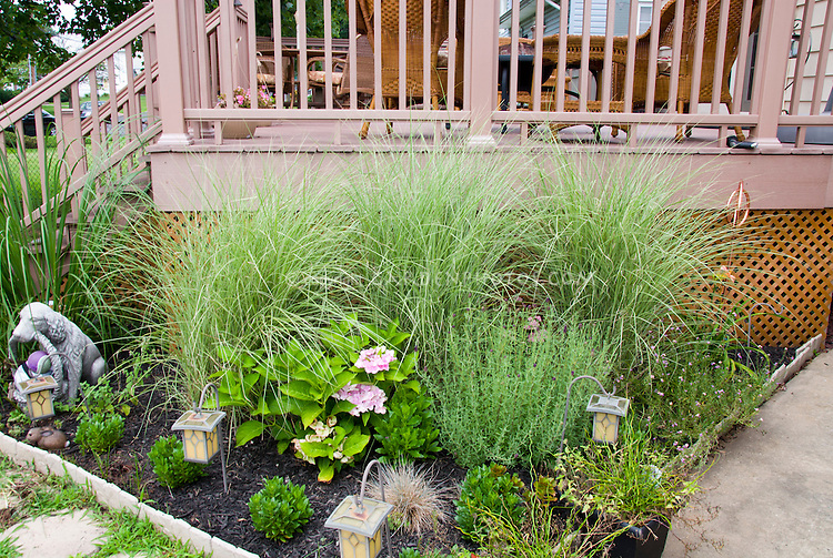 Deck and Miscanthus sinensis 'Morning Light' underplanted with hydrangea, foundation planting, with solar lighting, deck furniture, dog ornament