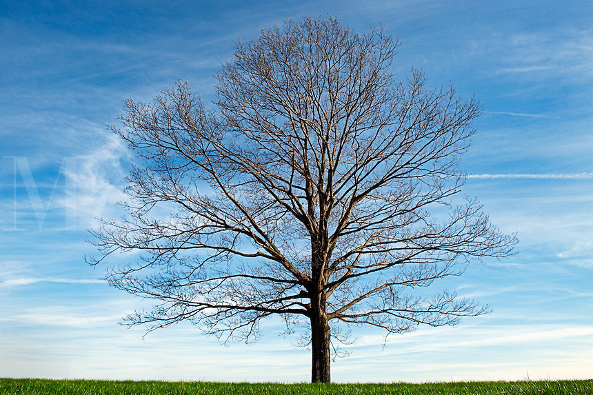 Barren tree and branches.