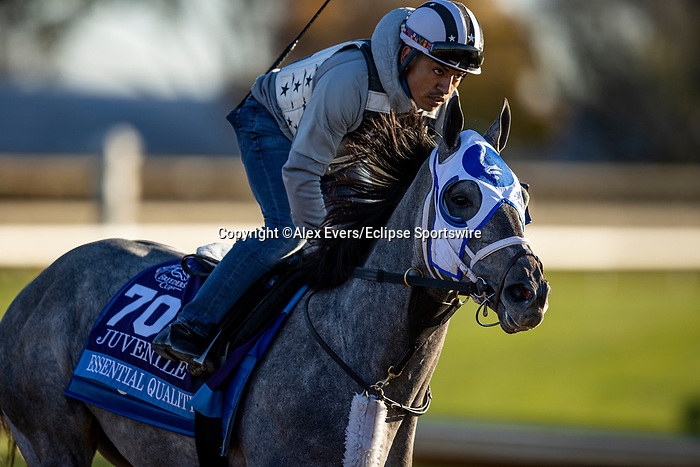 November 4, 2020: Essential Quality, trained by trainer Brad Cox, exercises in preparation for the Breeders' Cup Juvenile at r 4, 2020. Alex Evers/Eclipse Sportswire/Breeders Cup