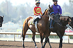"""ARCADIA, CA JUNE 25: #6 Hoppertunity with Mike Smith in the irons, in the post parade before The Gold Cup at Santa Anita (G1), a Breeders' Cup """"Win and You're in"""" challenge race at Santa Anita Park, in Arcadia, CA on June 25, 2016.  (Photo by Casey Phillips/Eclipse Sportswire/Getty Images)ARCADIA, CA JUNE 25:  a Breeders' Cup """"Win and You're in"""" challenge race at Santa Anita Park, in Arcadia, CA on June 25, 2016.  (Photo by Casey Phillips/Eclipse Sportswire/Getty Images)"""