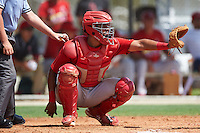 GCL Cardinals catcher Dennis Ortega (49) during the first game of a doubleheader against the GCL Marlins on August 13, 2016 at Roger Dean Complex in Jupiter, Florida.  GCL Cardinals defeated GCL Marlins 4-2 in a continuation of a game originally started on August 8th.  (Mike Janes/Four Seam Images)