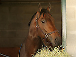 10 April 2010.   Aikenite is very alert on the morning of the Bluegrass Stakes.
