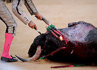 A dead bull is seen during the fourth corrida of the San Fermin Festival, on July 10, 2012, in the Northern Spanish city of Pamplona.  The festival is a symbol of Spanish culture that attracts thousands of tourists to watch the bull runs despite heavy condemnation from animal rights groups . (c) Pedro ARMESTRE