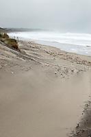 Sea Mist Scotch, Block Island