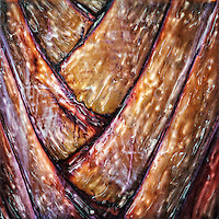 The bark of the palm tree.<br /> <br /> -Limited Edition of 50 Prints