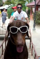 Dog and sun shades on Boracay, Philippines