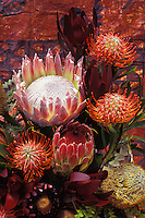 Protea, exotic plant often used in ornamental displays