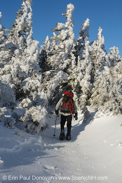 Snowshoer along the Carter-Moriah Trail (a segment of the Appalachian Trail), near Middle Carter Mountain, in Bean's Purchase, New Hampshire during winter conditions; this area is within the White Mountain National Forest.