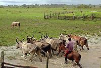 Vaqueiro leva gado para o curral, fazenda Tuiuiu.<br /> Cachoeira do Arari, Pará, Brasil.<br /> 08/05/2006<br /> Foto Paulo Santos/Interfoto