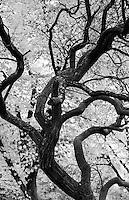 Berlino, quartiere Tempelhof. Albero --- Berlin, Tempelhof district. Tree