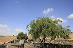 Israel, Korazin, ruins of a Jewish town in a basalt landscape overlooking the Sea of Galilee.