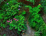Garden Path, Cypress Avenue Garden, Mill Valley, California